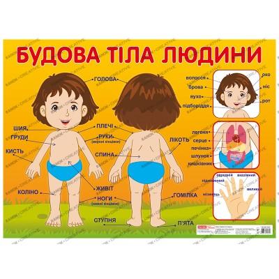 Плакат Будова тіла людини - фото Ранок Креатив