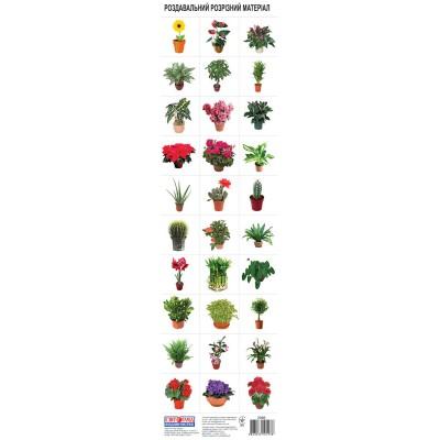 Комплект карток Кімнатні рослини - фото Ранок Креатив