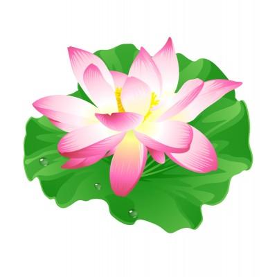 Комплект карток Жабки і квіточки - фото Ранок Креатив